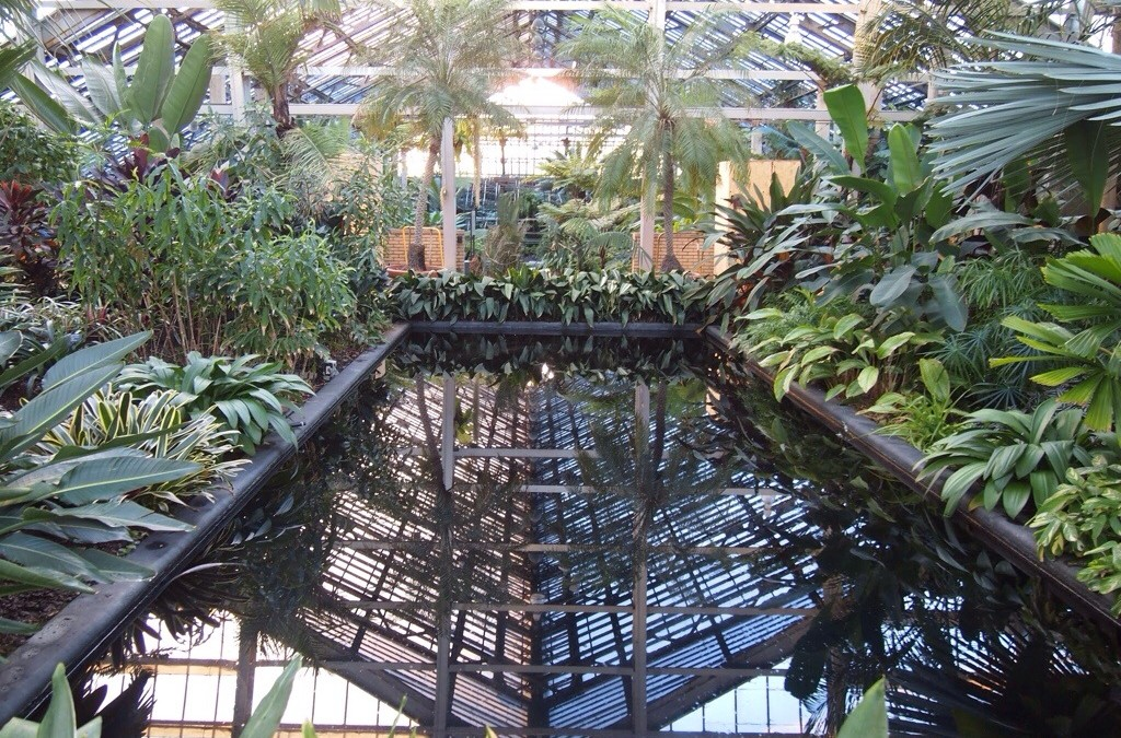 Garfield Park Conservatory, Chicago – Photos